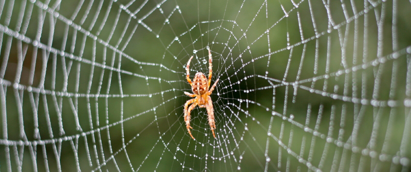 Spider Facts For Kids Arachnid Information For Students