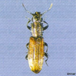 Beetle Information for Kids: Beetle Facts for Students