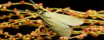 Moth Facts & Information from PestWorld for Kids
