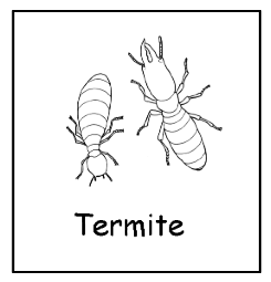 Grades 3-5: Termitology - Insect Lesson Plans for Kids