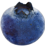 A large blueberry is about the size of a brownbanded cockroach - How Big Can a Cockroach Get?