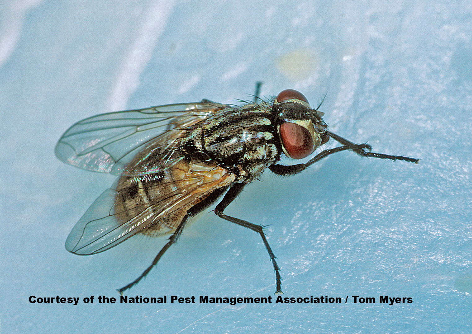 How To Remove Small Flies From Kitchen