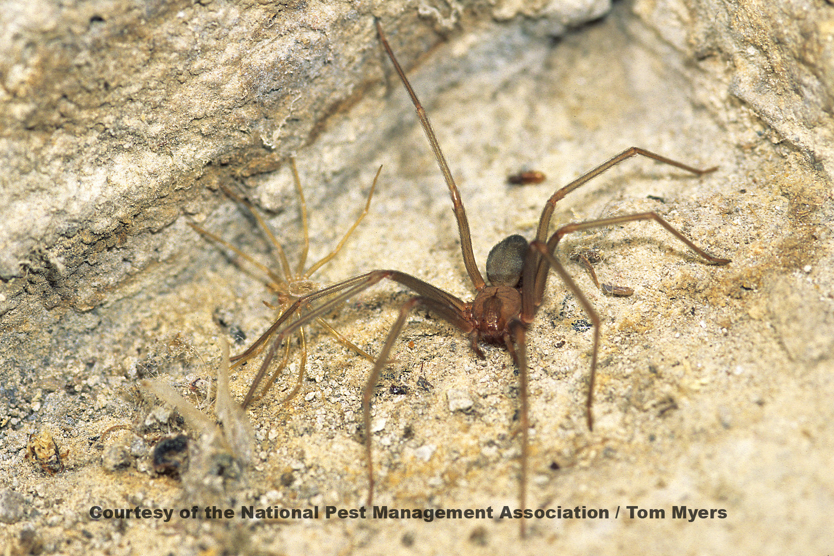 Spider Facts for Kids: Arachnid Information for Students - photo#28