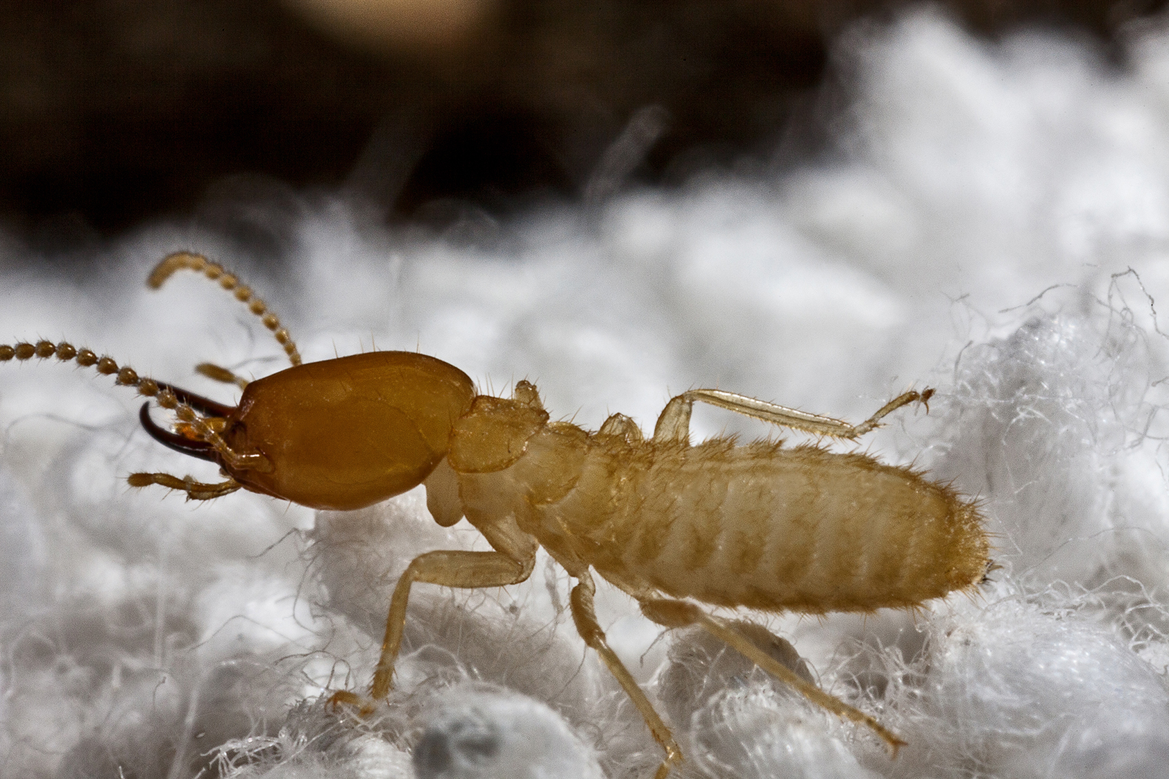 termites facts about termites types of termitse
